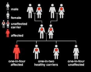Inheritance Chart